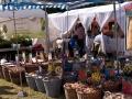 Blumenzwiebeln - Bauernmarkt im Freilichtmuseum Lindlar