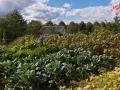 Blick übers Gemüsebeet im Rondorfer Garten - Bauernmarkt im Freilichtmuseum Lindlar