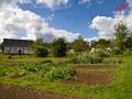 Blick übers Feld auf den Marktplatz 1 - Bauernmarkt im Freilichtmuseum Lindlar /Foto: Stefan Schmidt /Foto: Stefan Schmidt