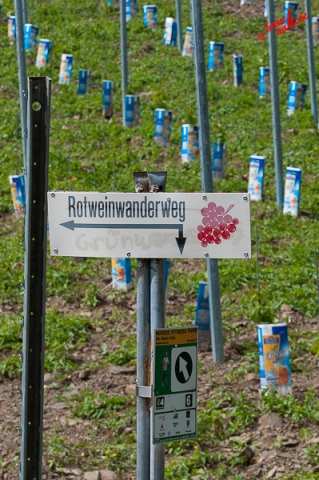 Rotweinwanderweg - Eistee-Plantage