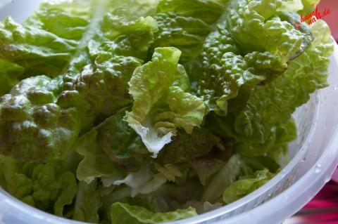 Pflückfrischer Salat