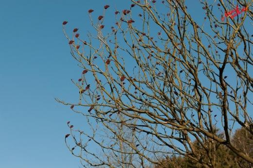 School's out - Abi-(Tr)Bäume die in den Himmel wachsen