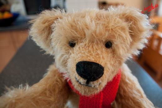 Mein neuer Kumpel - Teddy