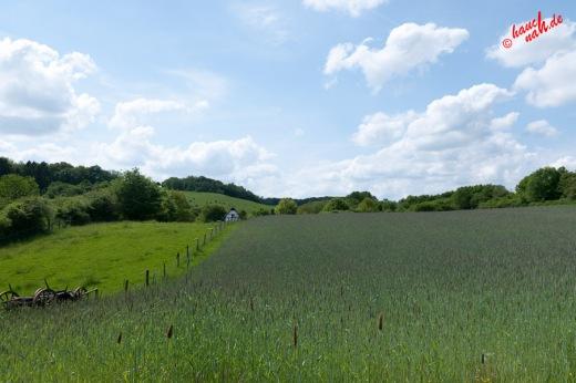 Getreidefeld im Bergischen Land